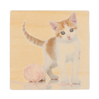 Kitten Next To Ball Of String Wood Coaster