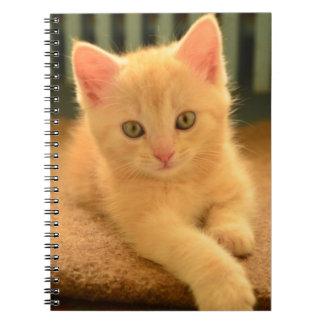 Kitten Notebooks