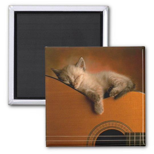 kitten-on-guitar magnet