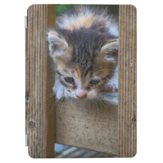 Kitten On Ipad iPad Air Cover
