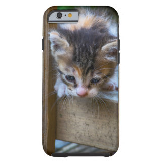 Kitten On Iphone cover