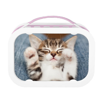 Kitten on lap. lunch box