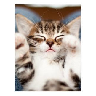 Kitten on lap post card