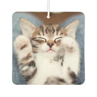 Kitten On My Lap Car Air Freshener
