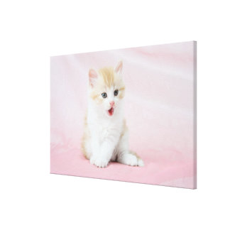 Kitten on Pink Background Canvas Print