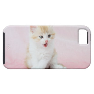 Kitten on Pink Background iPhone 5 Covers