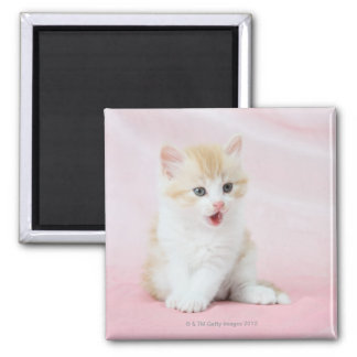 Kitten on Pink Background Square Magnet