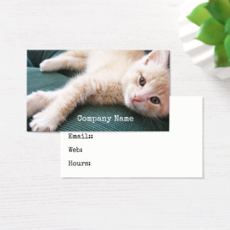 Kitten on Sofa Silly Friendly Orange Kitty Cat Business Card