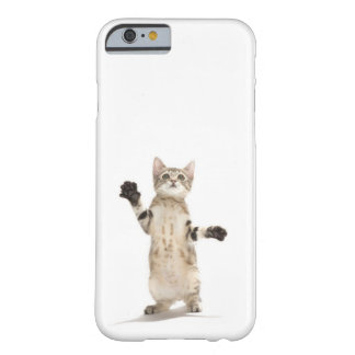 Kitten on white background barely there iPhone 6 case