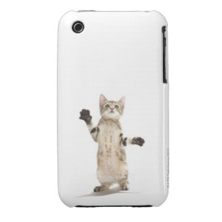 Kitten on white background iPhone 3 Case-Mate case