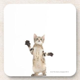 Kitten on white background coaster