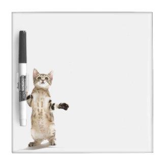 Kitten on White Background Dry Erase Board