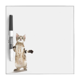 Kitten on White Background Dry Erase Boards