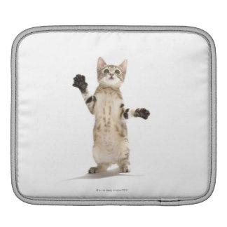 Kitten on White Background iPad Sleeve