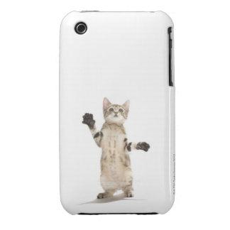 Kitten on white background iPhone 3 case
