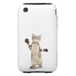 Kitten on white background iPhone 3 tough case