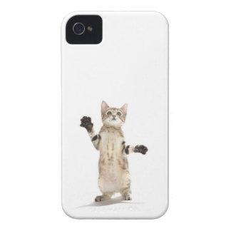 Kitten on white background iPhone 4 cases