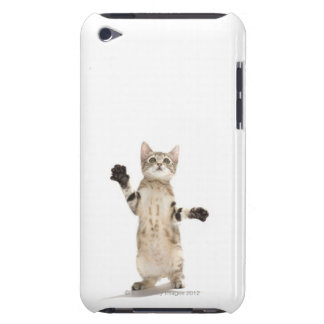 Kitten on white background iPod touch cases
