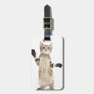 Kitten on White Background Luggage Tag