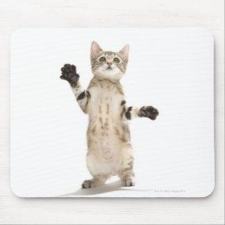 Kitten on White Background Mouse Mat