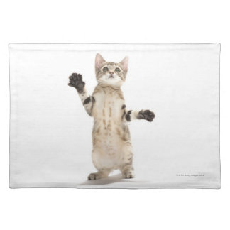 Kitten on White Background Placemat