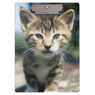 Kitten outdoors clipboard