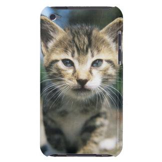 Kitten outdoors iPod Case-Mate cases