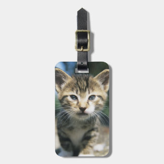 Kitten outdoors luggage tag