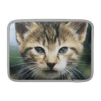 Kitten outdoors MacBook sleeve