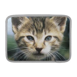 Kitten outdoors MacBook sleeve