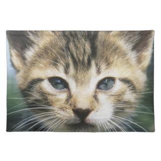 Kitten outdoors placemat