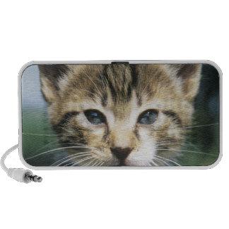 Kitten outdoors laptop speakers