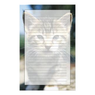 Kitten outdoors stationery