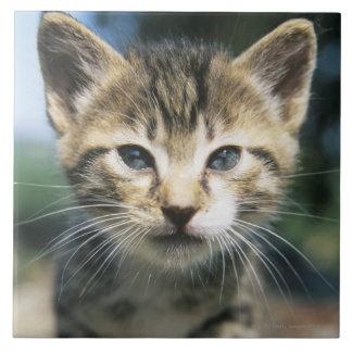 Kitten outdoors tile