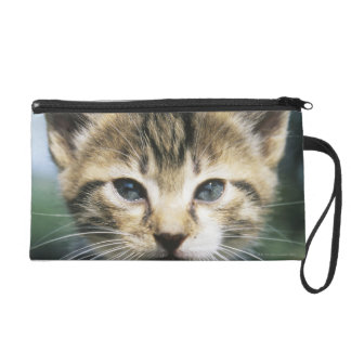 Kitten outdoors wristlet