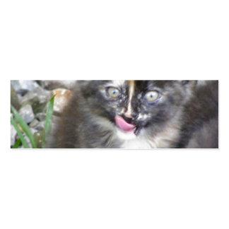 Kitten Pack Of Skinny Business Cards