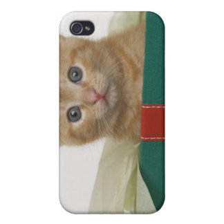 Kitten peeking out of gift box iPhone 4 cover