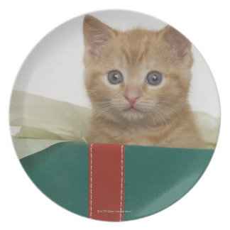 Kitten peeking out of gift box plate