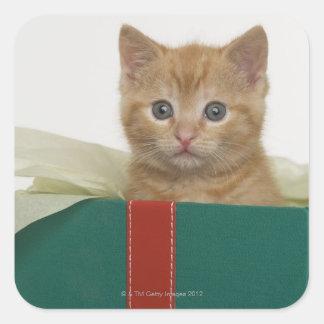 Kitten peeking out of gift box square sticker