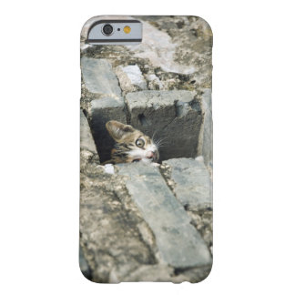 Kitten Peeking out of Wall, Yangshuo, Guangxi Barely There iPhone 6 Case