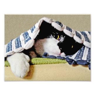 Kitten Peeking Under Blanket Photo