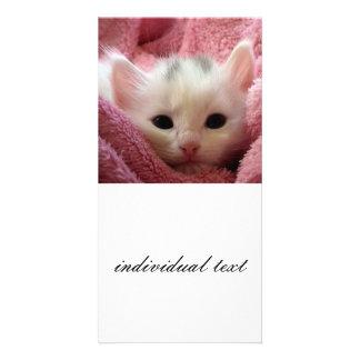 kitten personalized photo card