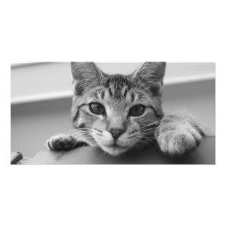 Kitten Photo Cards