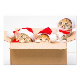Kitten Photograph