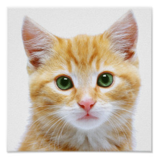 Kitten Picture Poster