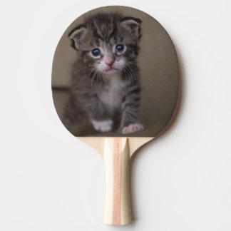 kitten` ping pong paddle