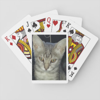 Kitten playing cards