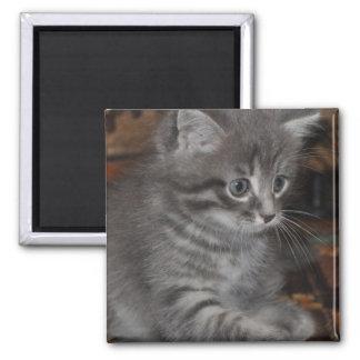 Kitten Playing Fridge Magnet
