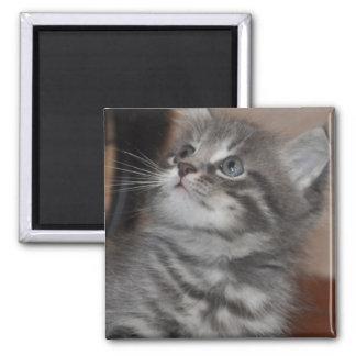 Kitten Playing Fridge Magnets
