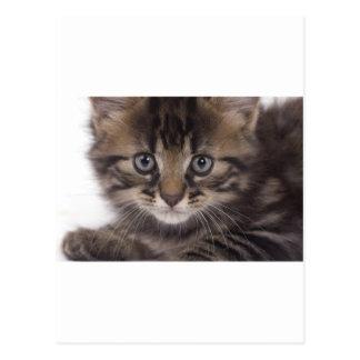 kitten post cards
